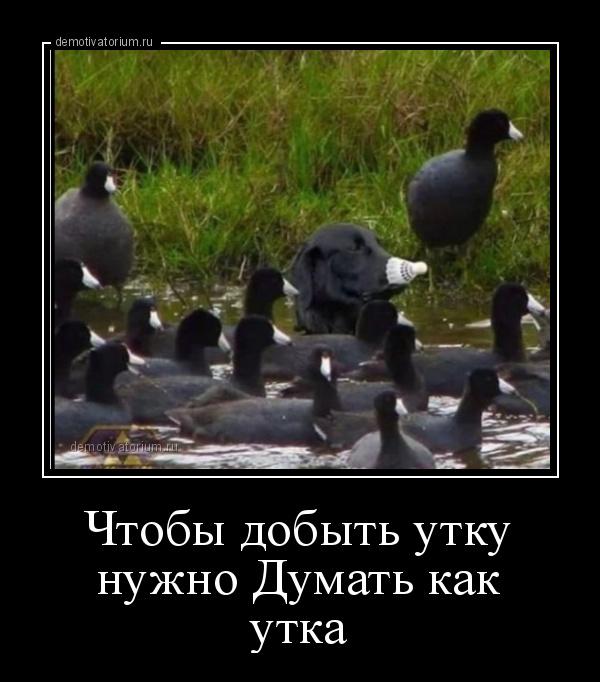 Чтобы добыть утку...